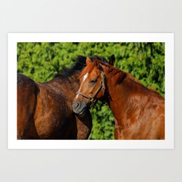 Lean on Me: Two Friends in the Summer Sun Art Print
