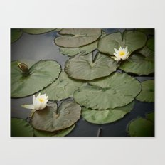 Kenilworth Lotus Canvas Print