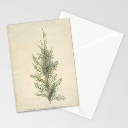 Vintage Botanical Juniper Branch Stationery Cards