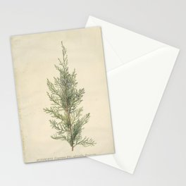 Botanical Juniper Stationery Cards