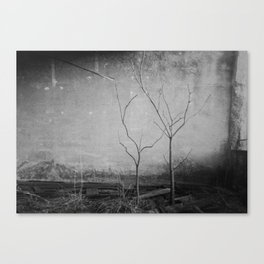 Out of the light of the sun Canvas Print