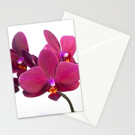 Orchid Flowers 03 Stationery Cards