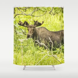 Bull Moose in Kincaid Park, No. 2 Shower Curtain