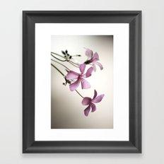 Sorrel Framed Art Print