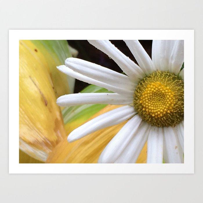 hello daisy Art Print