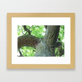 Sun-kissed trees Framed Art Print