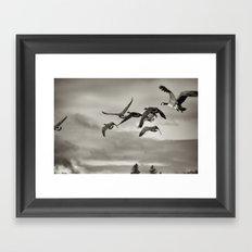Geese in Flight ,  Finger Lakes 2013 Framed Art Print
