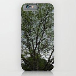 Texas Mesquite Tree iPhone Case