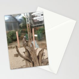 Sentry Meercat Stationery Cards