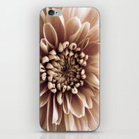 shabby chic iPhone & iPod Skins featuring Shabby Chic Flower by Dawn OConnor