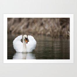 1046327 Mute Swan Art Print