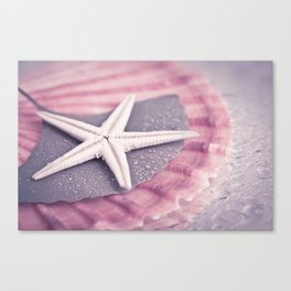 MARITIME STILL LIFE with sea shell and starfish Canvas Print
