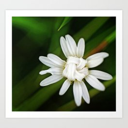 Knotted Daisy Art Print