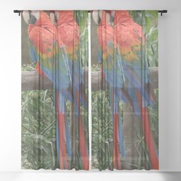 Scarlet Macaws Sheer Curtain