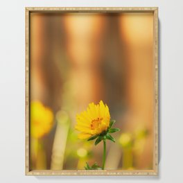 Coreopsis Flower with Orange Background Serving Tray