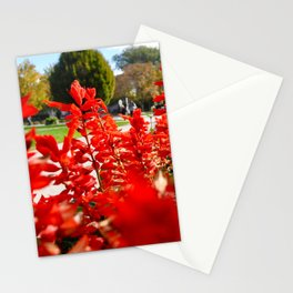 Red for Days. Stationery Cards