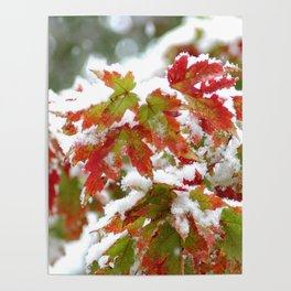 Holiday colors in a clash of seasons Poster