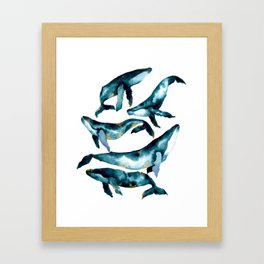 Humpback Whale Framed Art Print