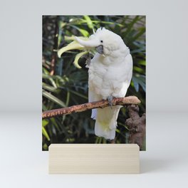 Sulfur-Crested Cockatoo Salutes the Photographer Mini Art Print