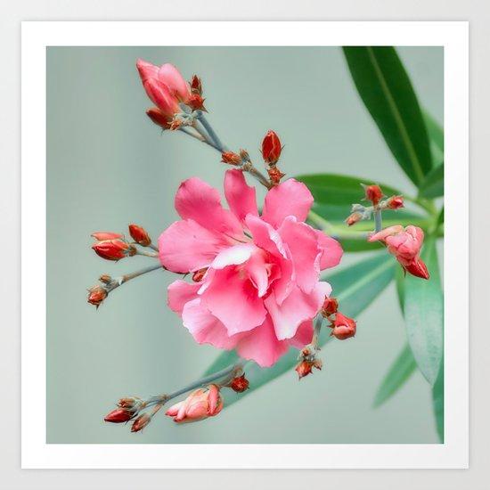 Blossom forward Art Print
