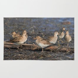 Party with Pectoral Sandpipers Rug