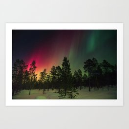 Rainbow colors of northern lights in pine forest at midnight Art Print