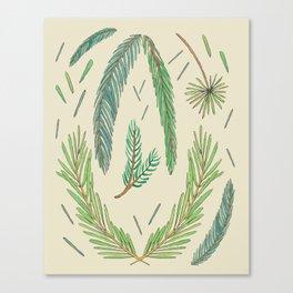 Pine Bough Study Canvas Print