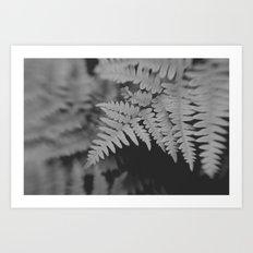 Black and White Botanical II Art Print