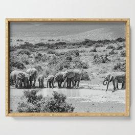 A group of Elephants | Addo Elephant National Park South Africa. Minimalistic print - fine art photography Art Print  Serving Tray