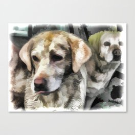 Labradors fun in the mud Canvas Print