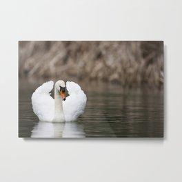 1046327 Mute Swan Metal Print