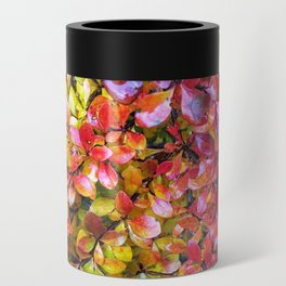Barberry Fall Colors Can Cooler