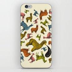 camelids iPhone & iPod Skin