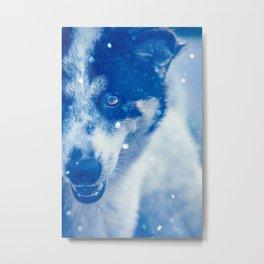 Bo 1.0 in snow Metal Print