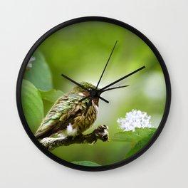 Hummingbird Sitting Wall Clock