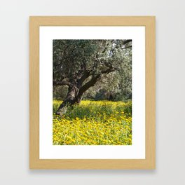 The Old Olive Grove in Ozankoy Framed Art Print