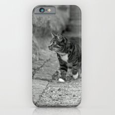 The cat in the alley Slim Case iPhone 6s