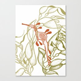 Weedy Seadragon 1 Canvas Print