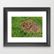 Leveret Framed Art Print