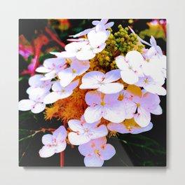 oak leaf hydrangea in color Metal Print