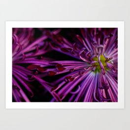 Purple & Black Art Print
