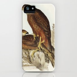 Radiated Goshawk (Astur radintus) illustrated by Elizabeth Gould (1804–1841) for John Gould's (1804- iPhone Case