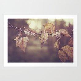Fall leaves in the morning sun Art Print