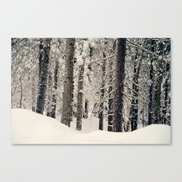 Winter Woods 1 Canvas Print