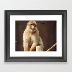 Majestic little shithead Framed Art Print
