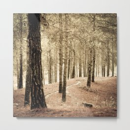 Forest BW 02 Metal Print