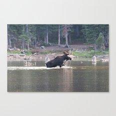 Majestic Moose Canvas Print