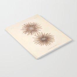 Naturalist Sea Urchins Notebook