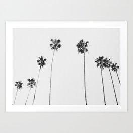 Black & White Palms Kunstdrucke