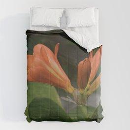 Clivia miniata Comforters